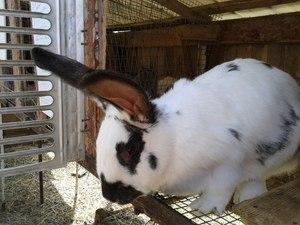 Заявление о увеличении аванса образец